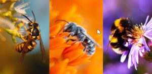 image of wasp, hornet and bee