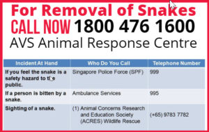 removal of snakes contact numbers
