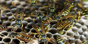 wasp crawling around their nest